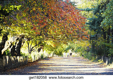 Pictures of Trees along a road, Central Park, Manhattan, New York.