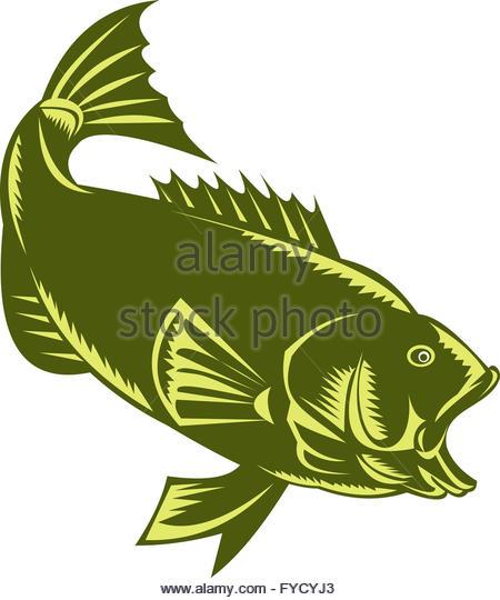 Largemouth Black Bass Stock Photos & Largemouth Black Bass Stock.