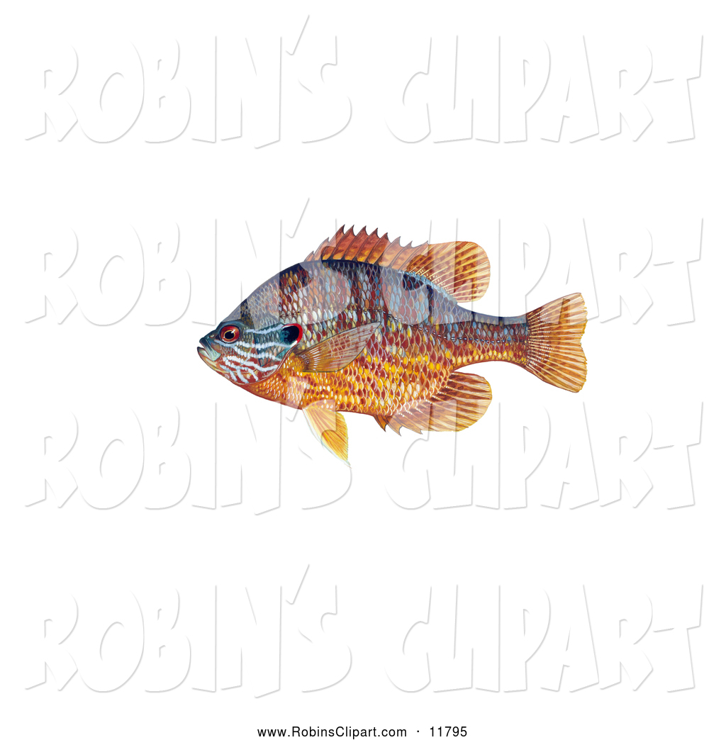 Clip Art of a Pumpkinseed Fish (Lepomis Gibbosus) on Display by.