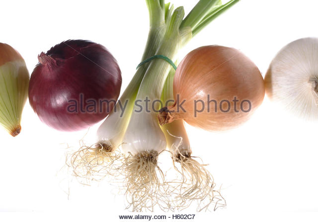 Welsh Onion Allium Fistulosum Stock Photos & Welsh Onion Allium.
