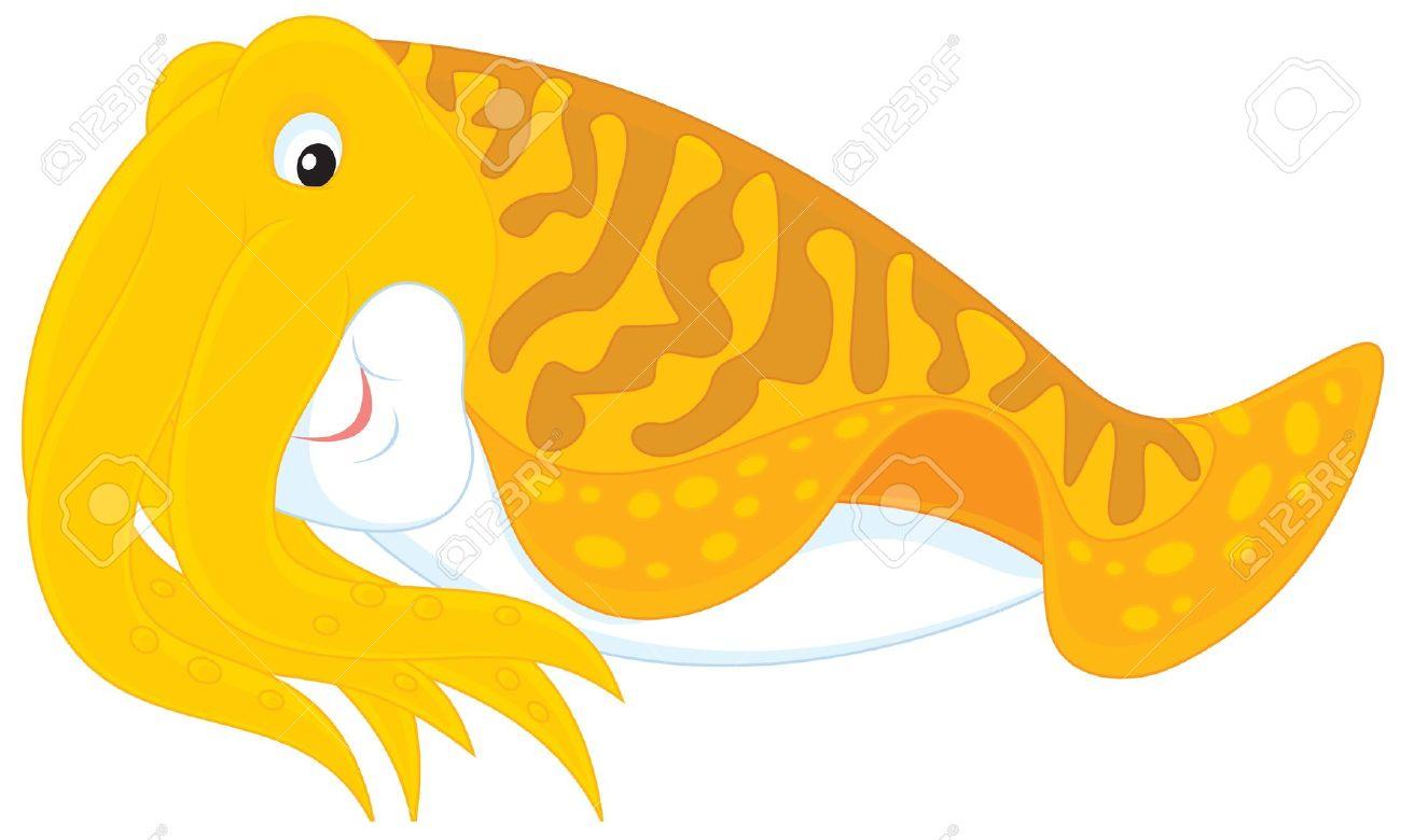 Cephalopod clipart.