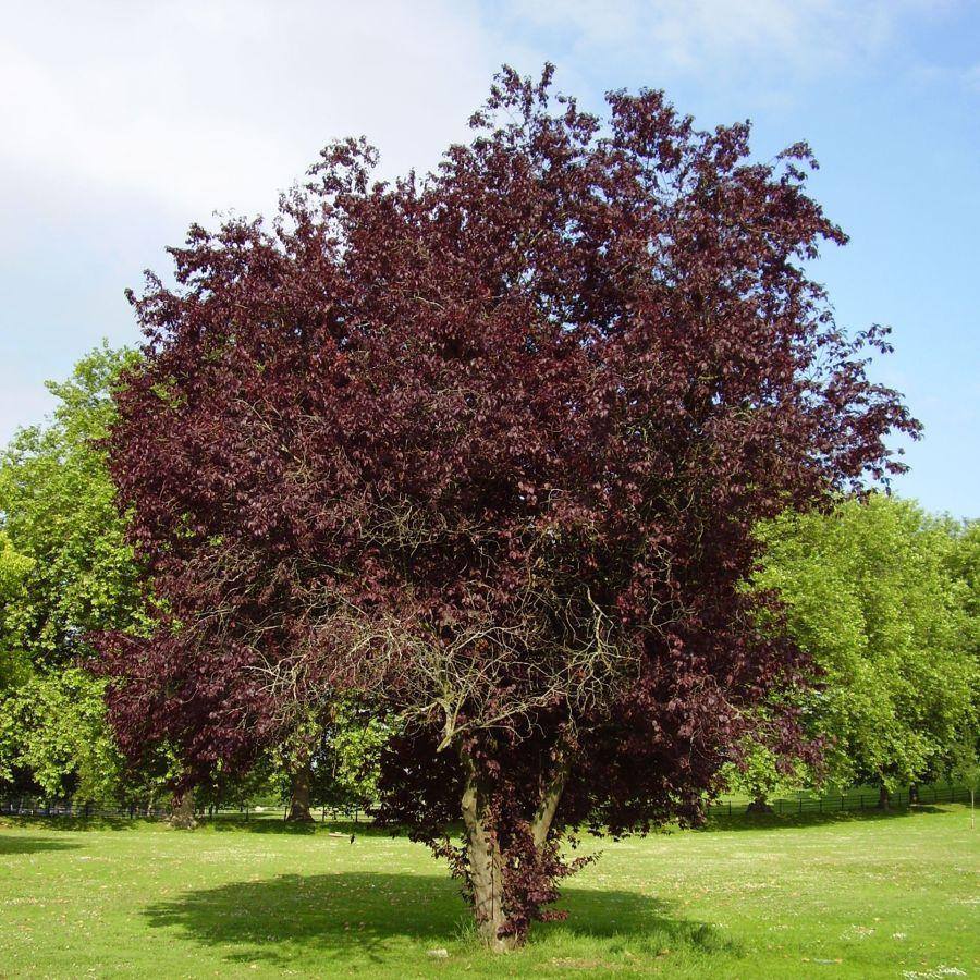 Small Trees For Garden #2.