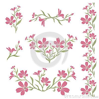 Cerastium Tomentosum Stock Photos, Images, & Pictures.