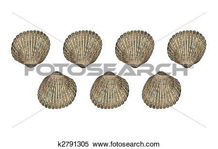 Stock Image of Seven seashells (Cerastoderma Edule) k2791305.