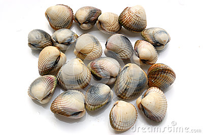 Fresh Shells, Cerastoderma Edule Royalty Free Stock Images.