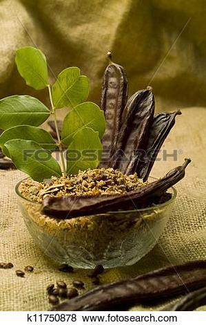 Pictures of The Carob (Ceratonia siliqua) k11750878.