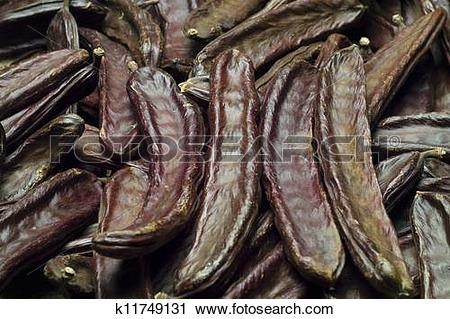 Stock Photography of The Carob (Ceratonia siliqua) k11749131.