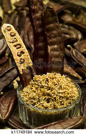 Stock Photo of The Carob (Ceratonia siliqua) k11749184.