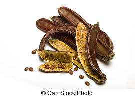 Picture of Carob (Ceratonia siliqua) isolated on white background.