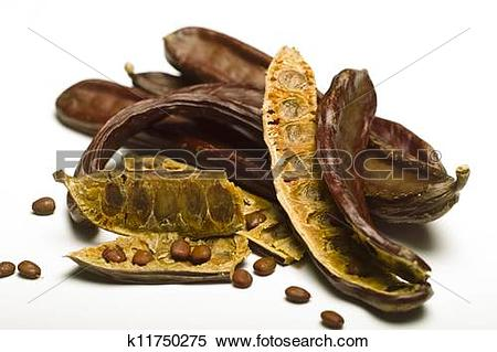 Stock Image of Carob (Ceratonia siliqua) isolated on white.