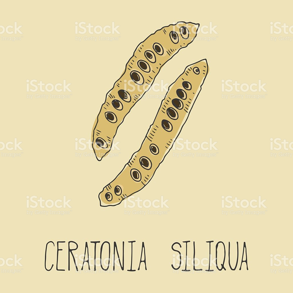 Carob Pods Ceratonia Siliqua Vegetarian Decaffeinated Food stock.