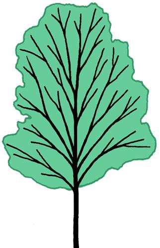 Katsura Tree.