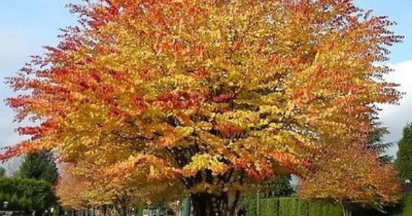 Trees, Toffee and Autumn on Pinterest.