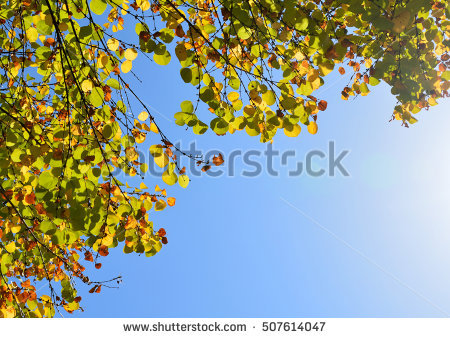 Japonicum Stock Photos, Royalty.
