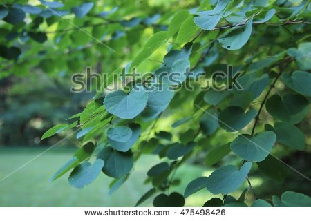 Large Deciduous Tree Stock Photos, Royalty.