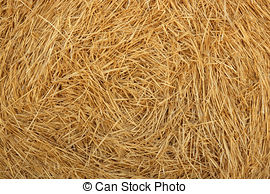 Stock Photography of Golden and green cereal fields landscapes in.