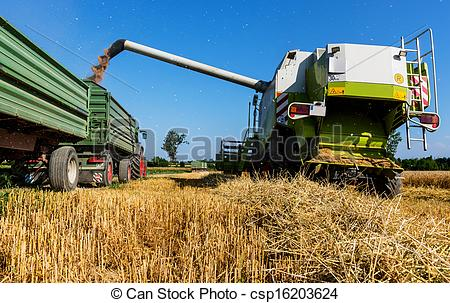 Stock Photo of cereal field of wheat at harvest.