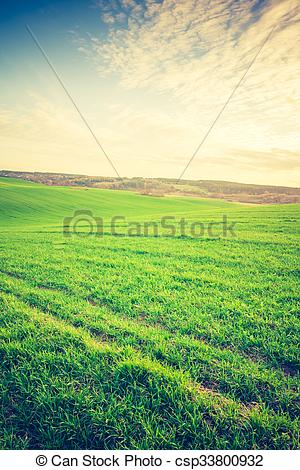 Stock Photos of Vintage photo of young green cereal field.