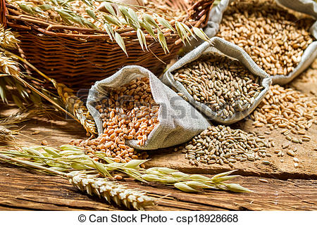 Stock Image of Different types of cereal grains with ears.