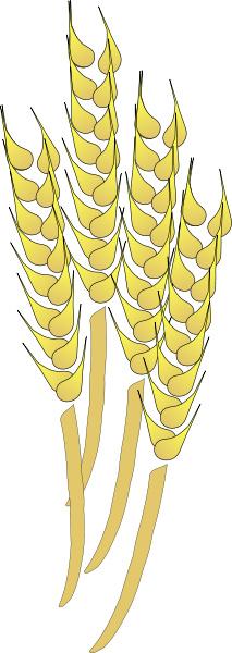 Whole grains clipart.