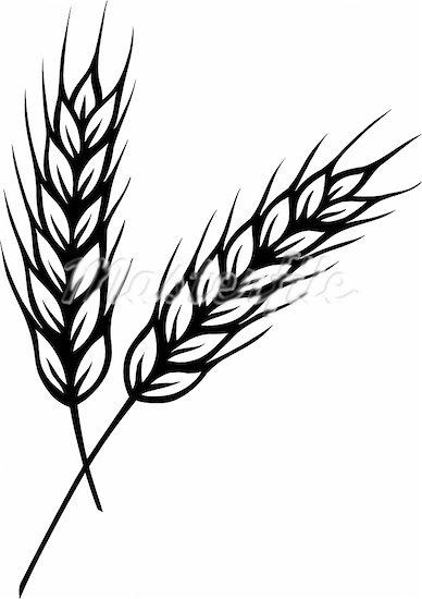 Grains cliparts.