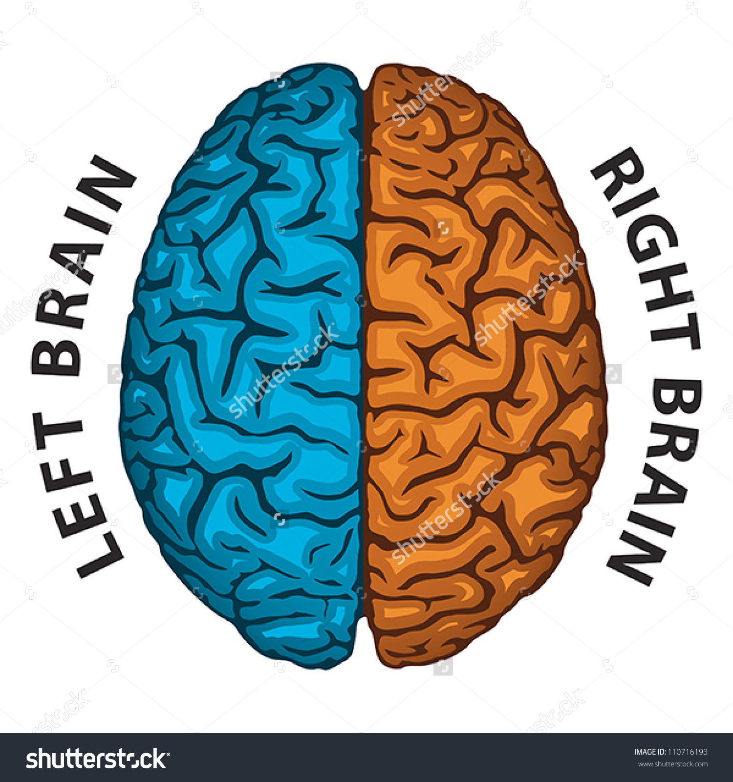 Left Brain Right Brain Human Brain Stock Vector 110716193.