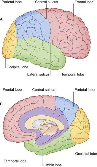 Cerebral topography.