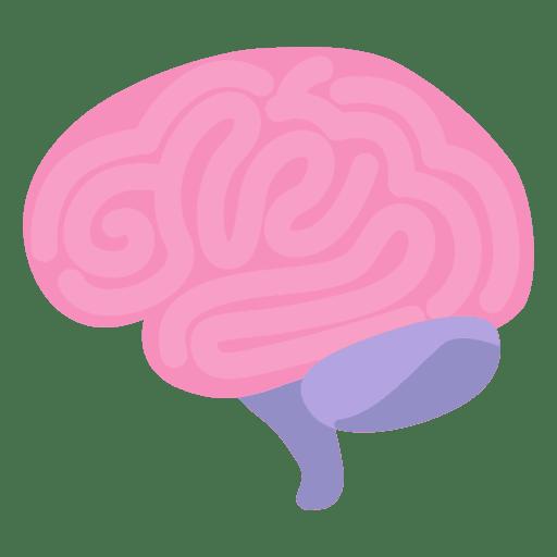 Png Cerebro Vector, Clipart, PSD.