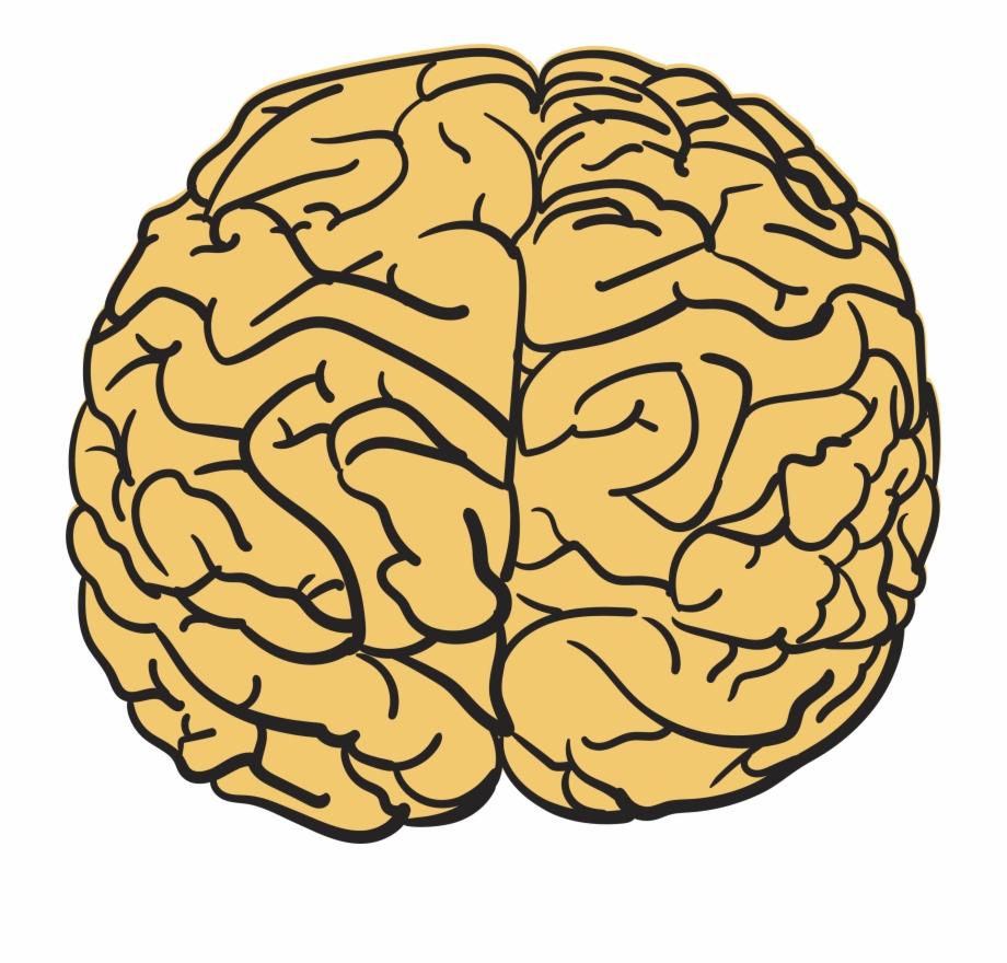 Brain Clipart Yellow.