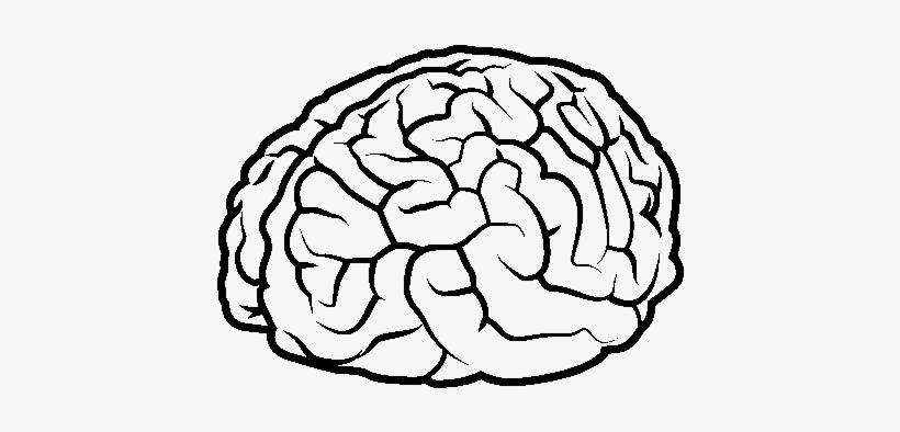 Dibujo De Cerebro Para Colorear.
