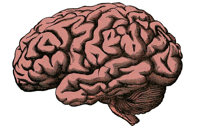 Algunos mitos sobre el cerebro humano.