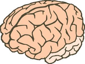Brain 2 Clip Art Download.