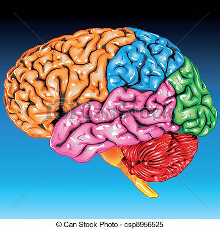 Clipart Vector of Human brain lateral view.