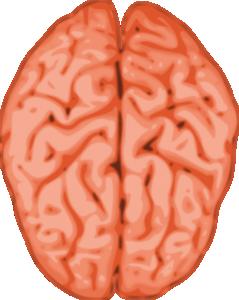 Cerebrum Clip Art Download.