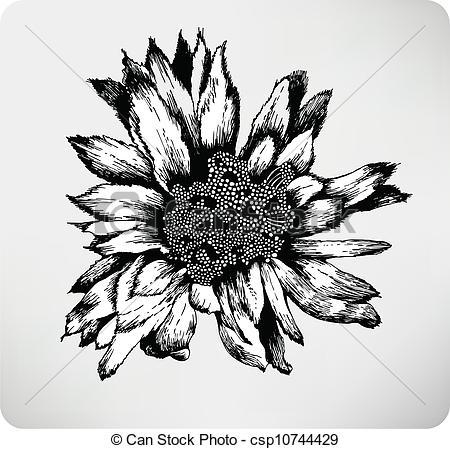 Vector Illustration of Hand drawn flower cactus Cereus peruvianas.