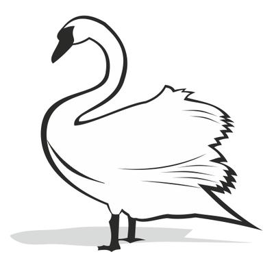 Černá a bílá labuť silueta, Obrázky.