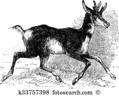 Antilope cervicapra Clipart EPS Images. 5 antilope cervicapra clip.