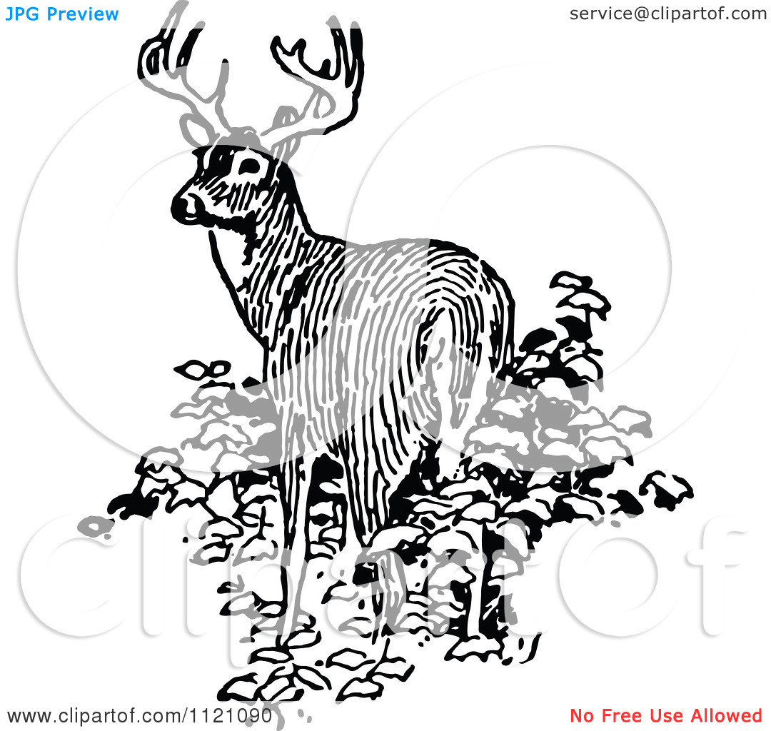 Clipart Of A Retro Vintage Black And White Deer In Bushes.