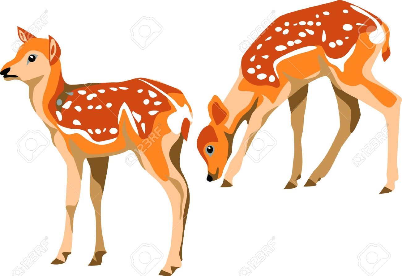 Sika Deer Fawn Royalty Free Cliparts, Vectors, And Stock.