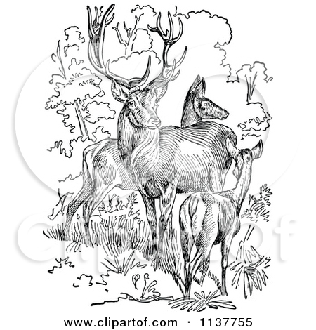 Clipart Retro Vintage Black And White Stag Buck Deer With Antlers.