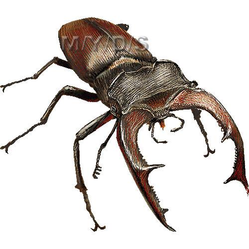 Lucanus Cervus, Stag Beetle clipart graphics (Free clip art.