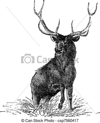 Elk Illustrations and Clipart. 3,340 Elk royalty free.