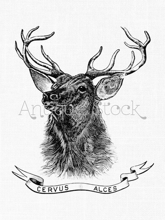 Deer Clipart 'Cervus Alces' Antique Elk, Stag, Wapiti Drawing.