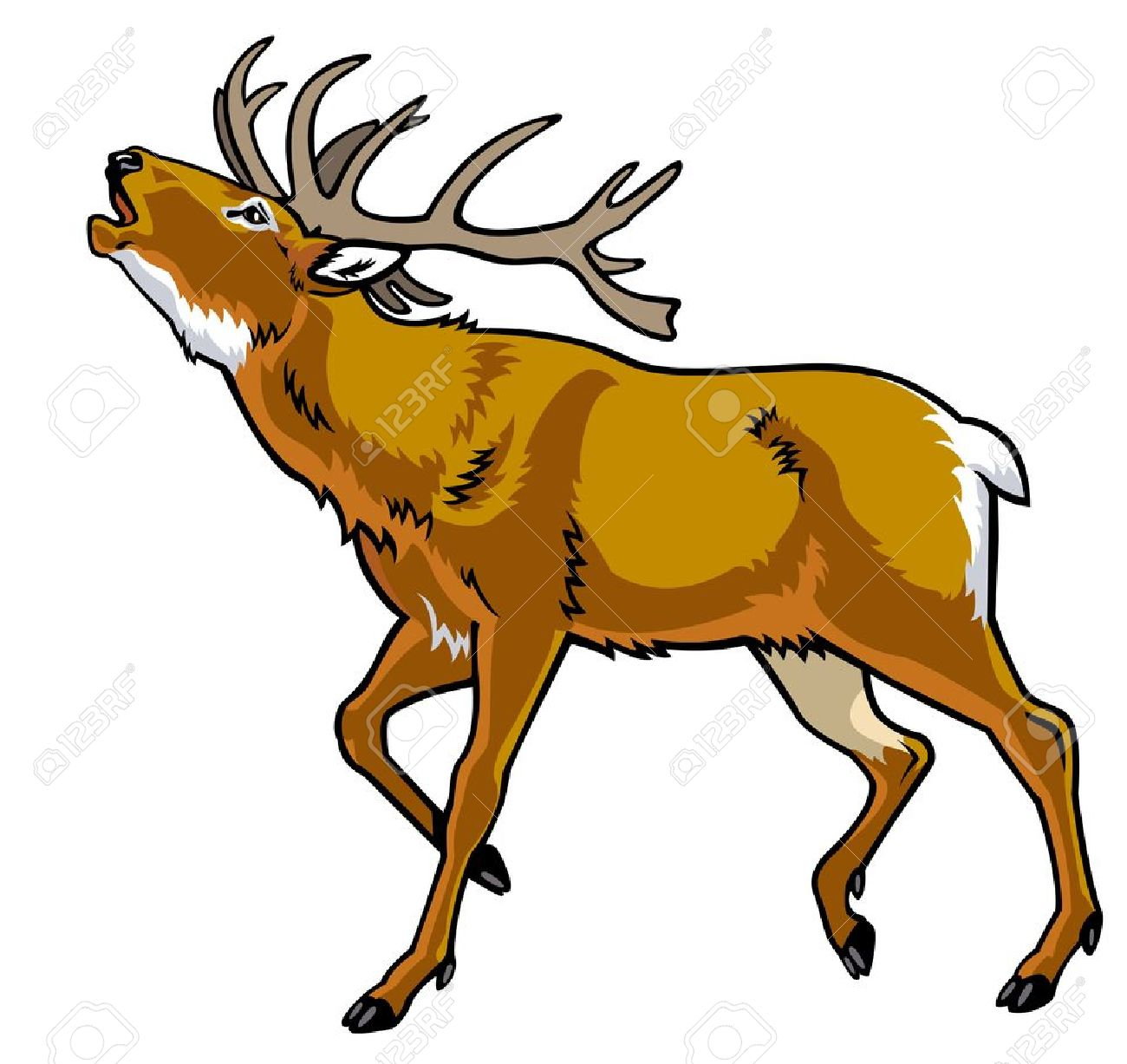 51 Cervus Elaphus Stock Illustrations, Cliparts And Royalty Free.