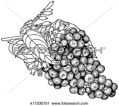 Clipart of Plant Cestrum purpureum k11530151.
