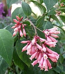 1000+ images about Plants on Pinterest.