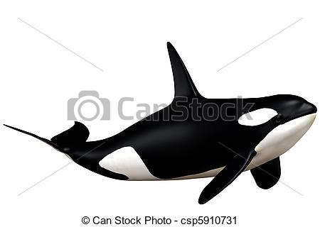 Cetacean Illustrations and Clipart. 576 Cetacean royalty free.