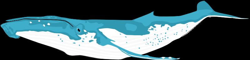 Whale Clip Art Download.