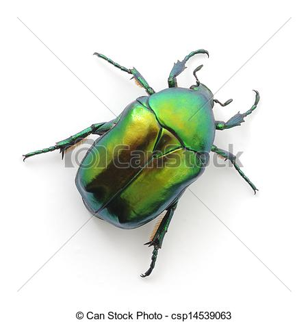 Stock Image of green beetle insect rose chafer (cetonia aurata.