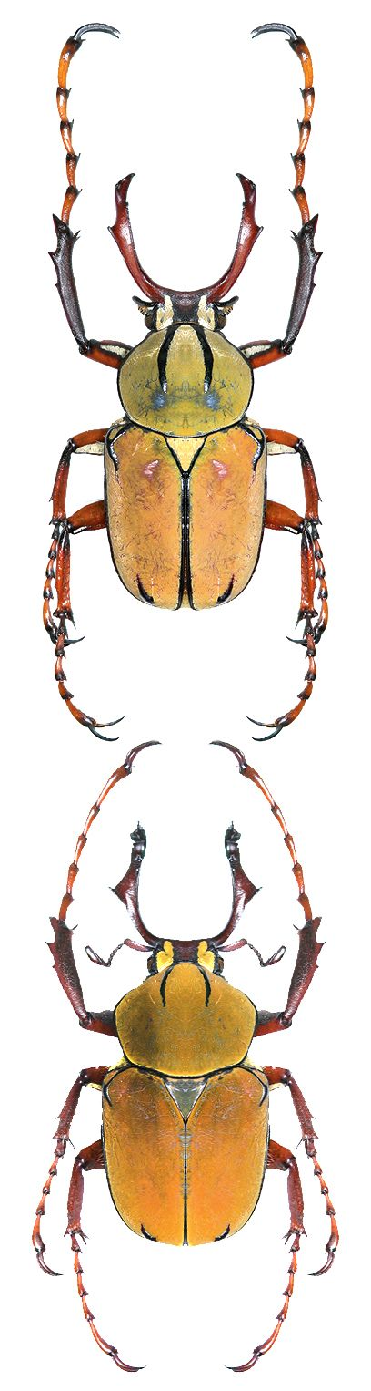 1000+ images about INSECTA.